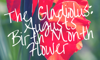 Most of us know our birthstone and zodiac signs, but did you know the Gladiolus flower is the August birth month ...